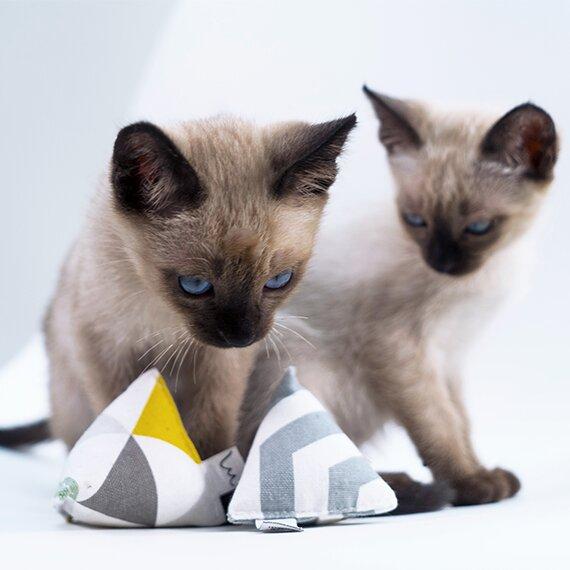 kleine Katze mit Katzenminze Spielzeug in Pyramidenform